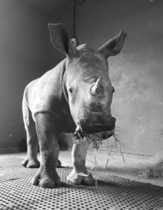 rhino25